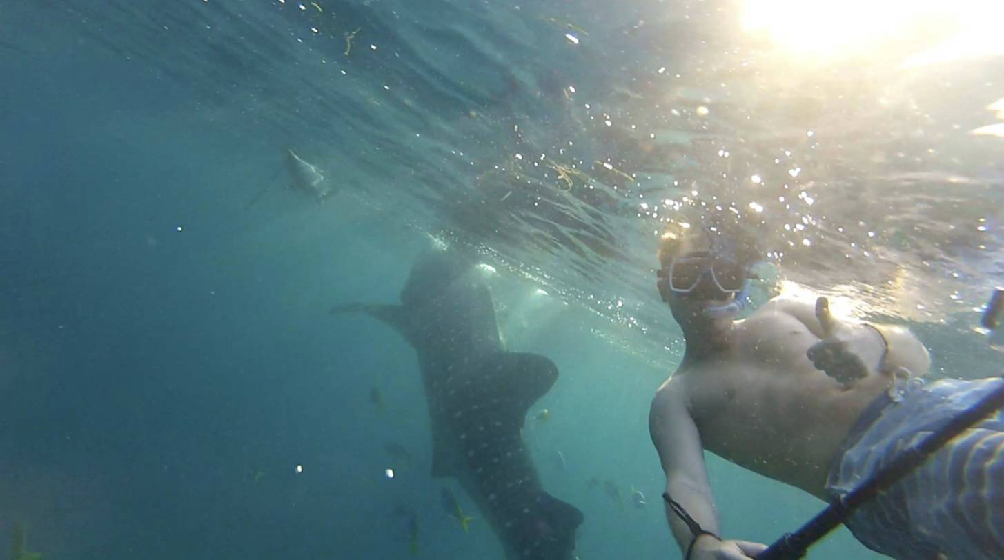 Donsol, Walvishaaien Filipijnen