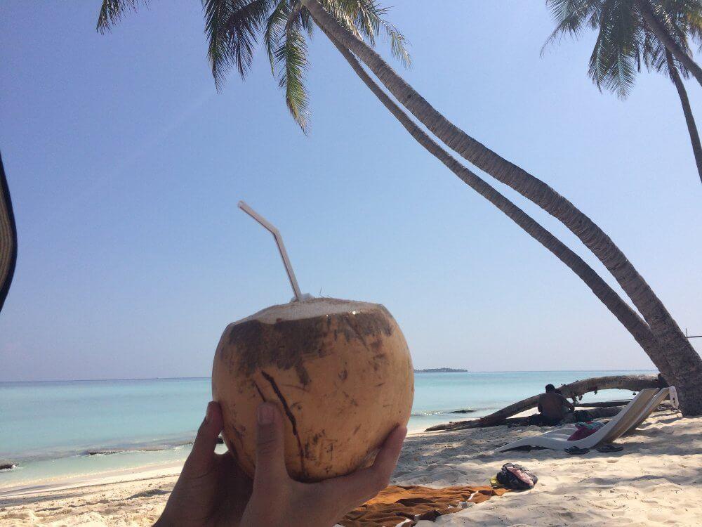 kokosnoot in de Malediven