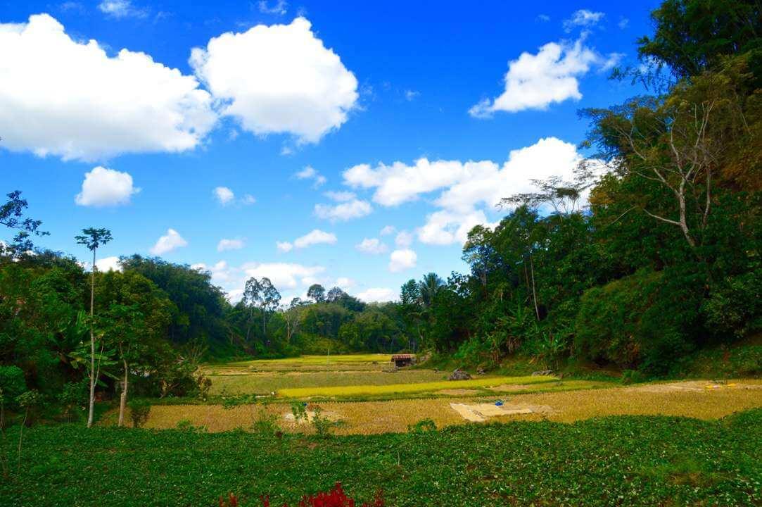 natuur Tana Toraja