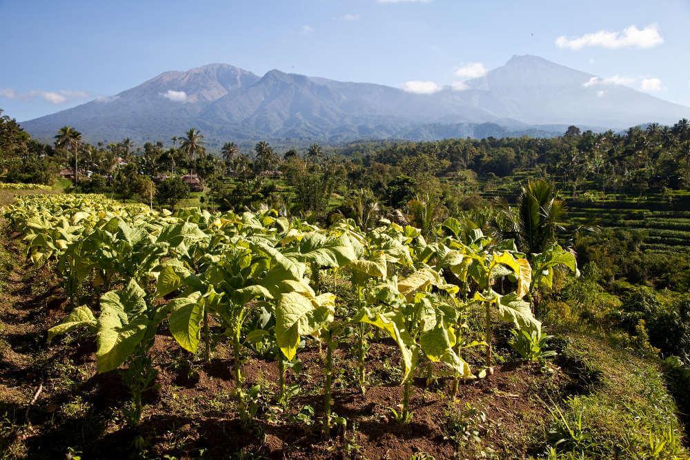 Reizen in Lombok