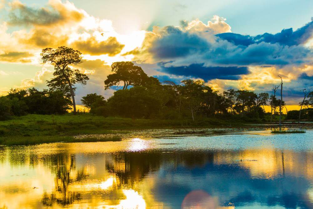 Pantanal,Brazilie