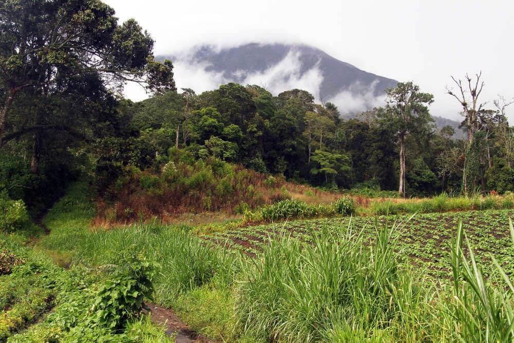 Kerinci National Park