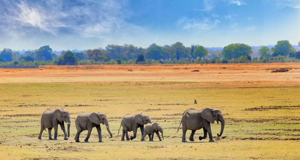 Luangwa National Park in Afrika