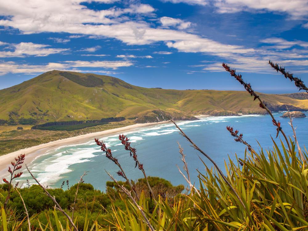 stranden Dunedin