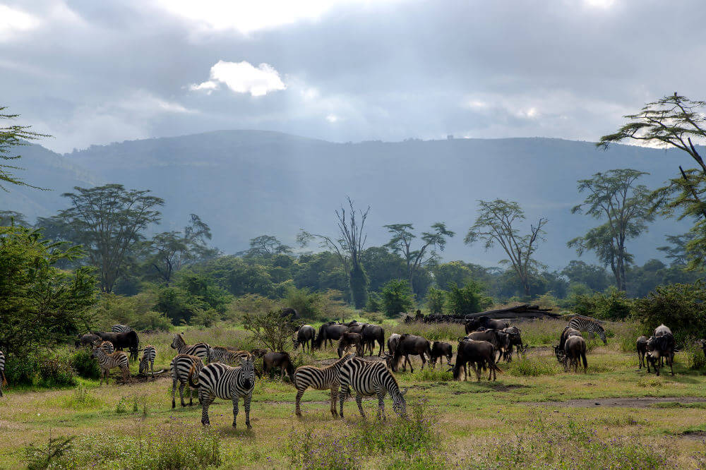 Ngorongoro National park in Afrika