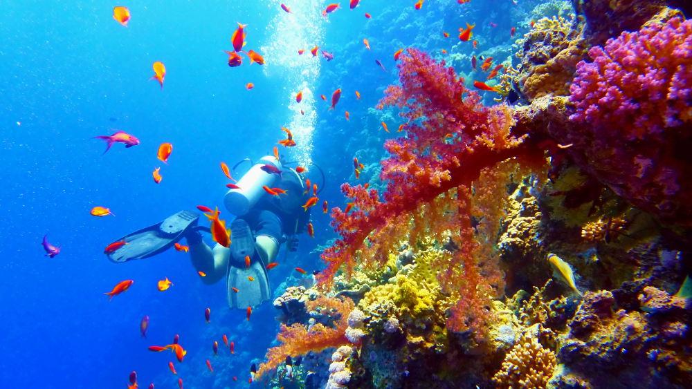 Duikers in de kleurrijke onderwaterwereld