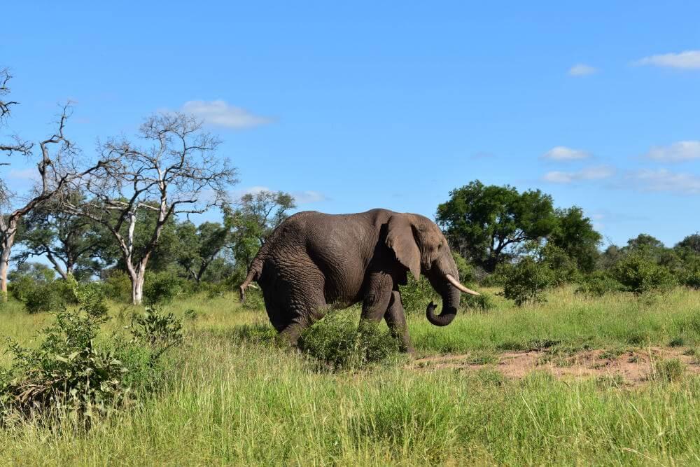 Beste reistijd voor Zuid-Afirka