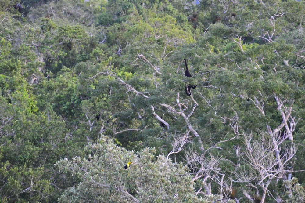 De Jungle van El Mirado