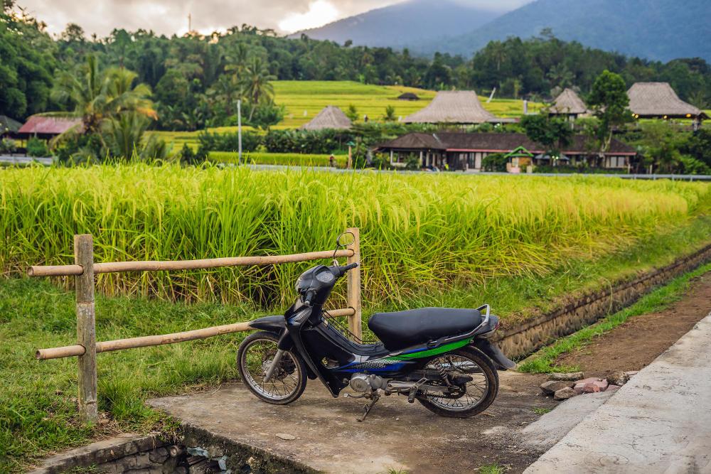 Rijstveld Bali