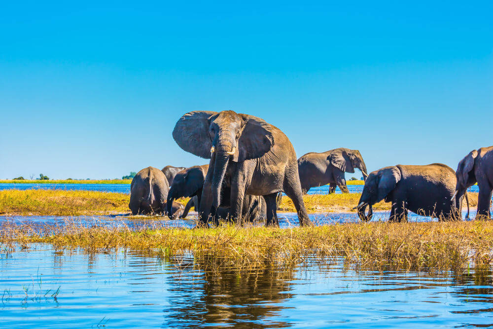 Chobe National Park in Afrika