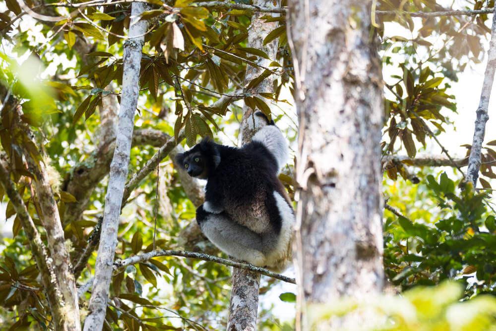 Andasibe Mantadia National Park, Madagascar