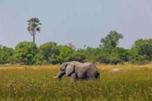 Beste reistijd voor Botswana