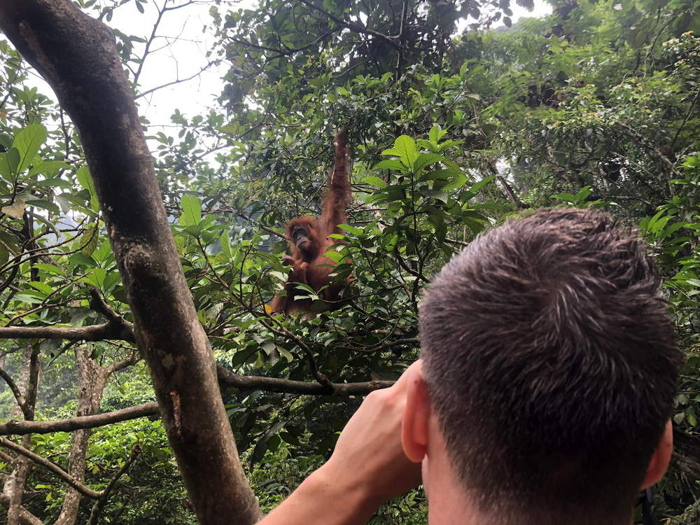 Bukit Lawang jungle trek