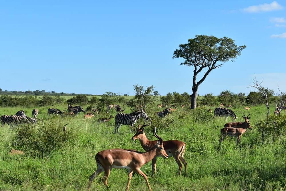 Tips voor het Krugerpark