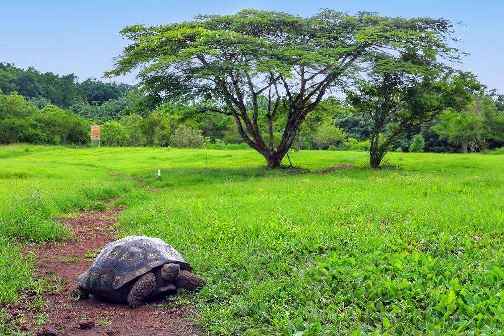 Reuzenschildpad op de Galapagos eilanden