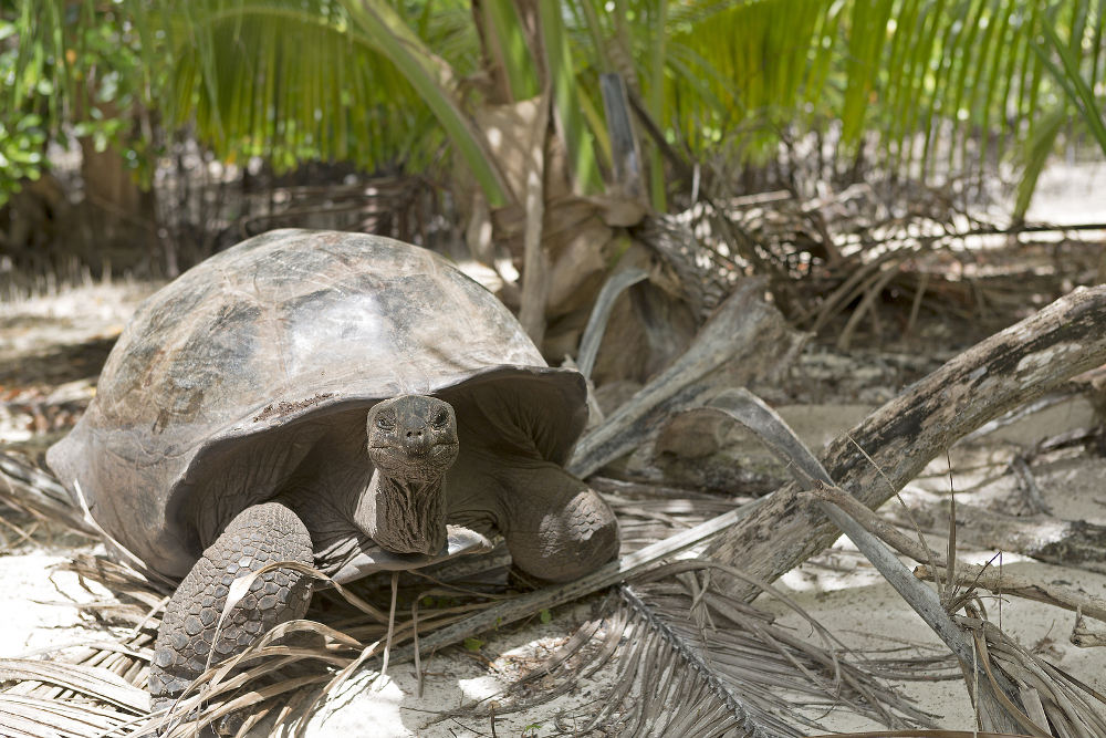schildpad Curieuse island Seychellen