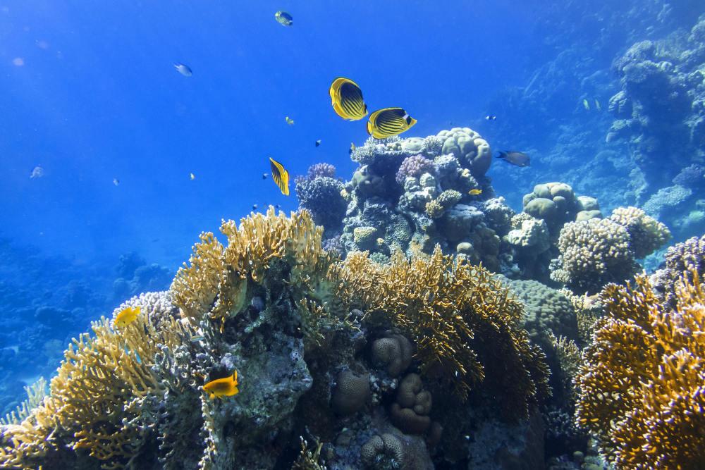 Palau Koon