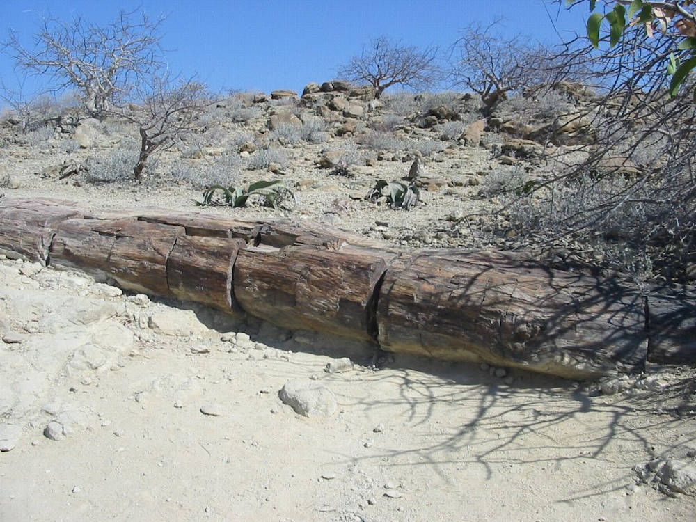 Petrified forrest.