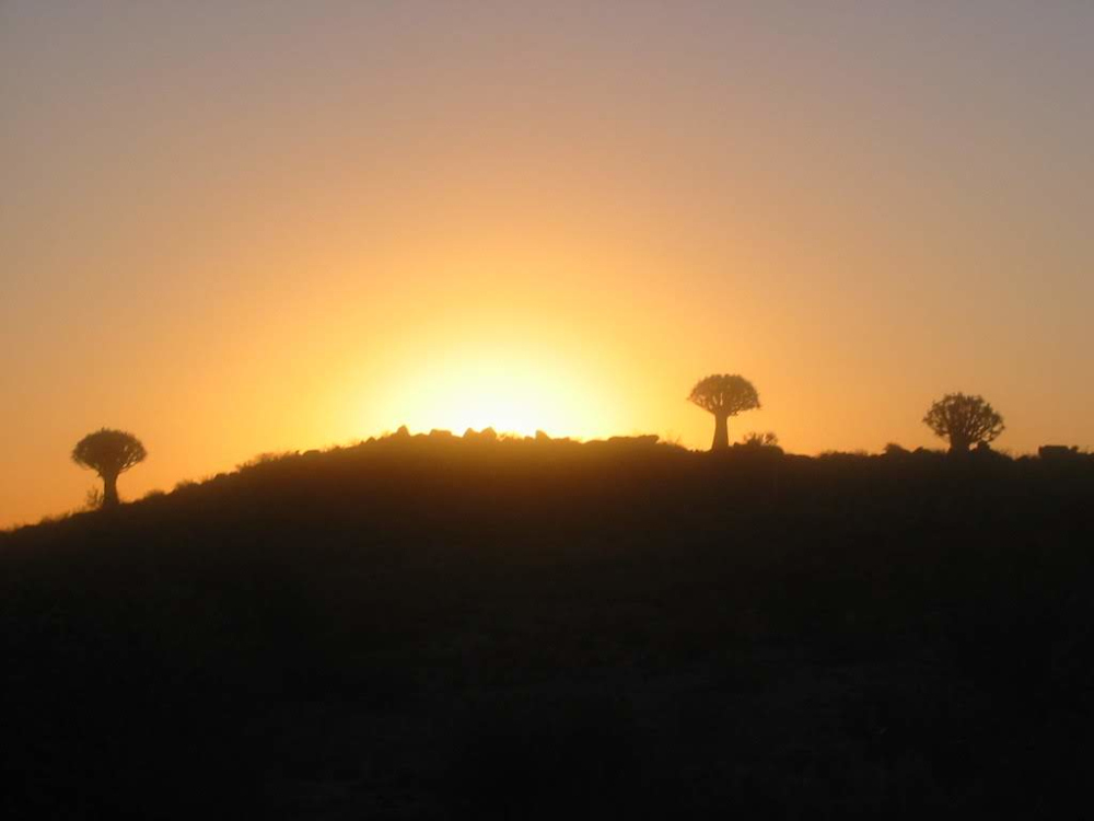 Quiver tree forrest Keetmanshoop Namibie