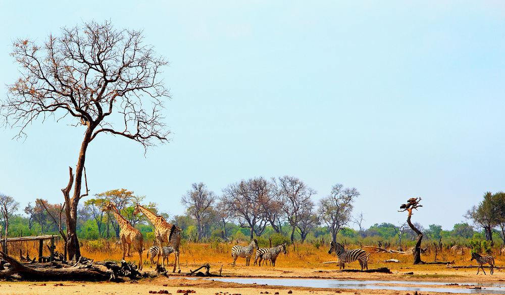 waterhole Hwange National Park Zimbabwe