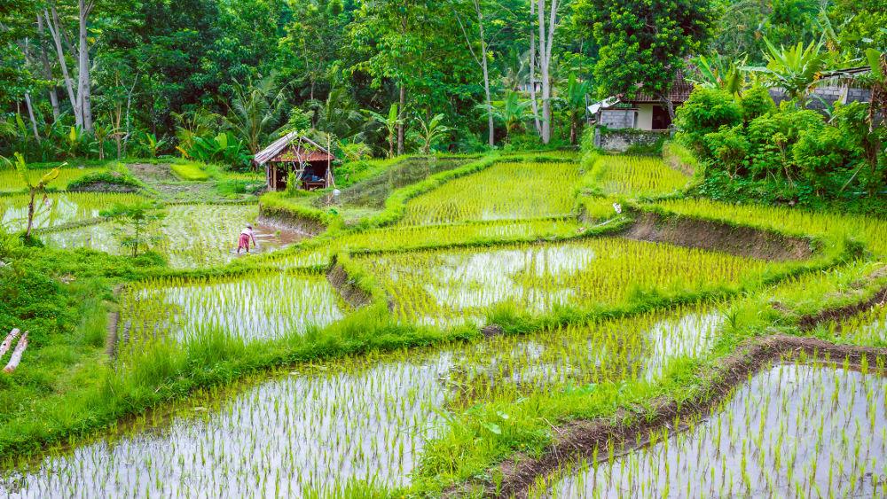 Sidemen op Bali