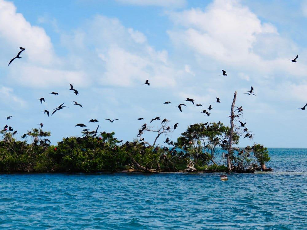 Birds Caye