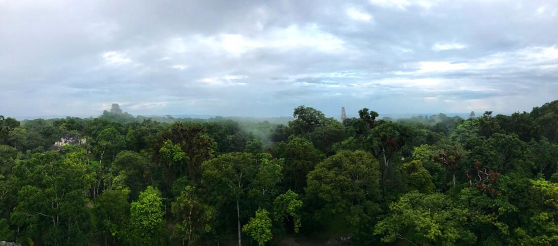 Jungle Guatemala