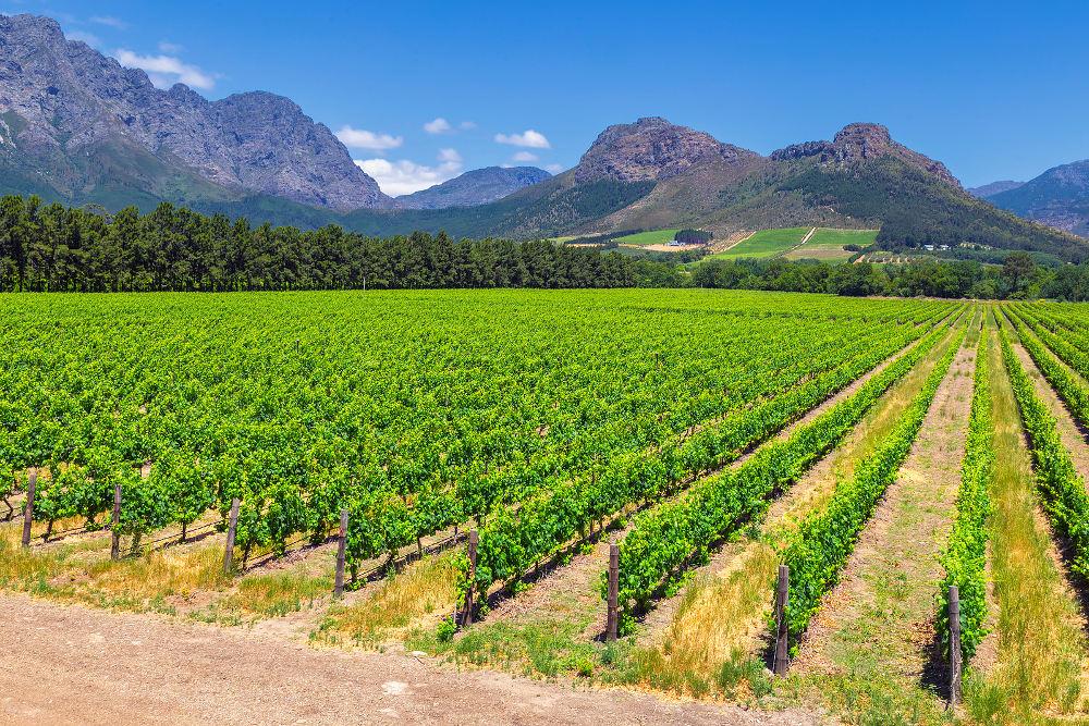 Wijnroute in Zuid-Afrika